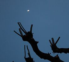 Reaching for the Moon by Alex Boros