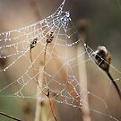 The webs we weave..... by Sue Ratcliffe
