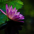 peeking out from underneath the lily pad by Gerry Daniel