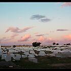 Monastir Cemetery by Tim Topping