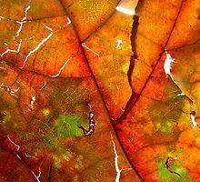 Fallen Beauty by Kathie Nichols