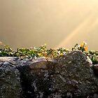 Sonnenstrahl auf der Mauer by Silvia Eichhorn