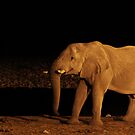 Elephant at a Night Watering Hole - Etosha, Namibia by digsy