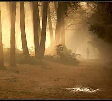Misty morning by Janone