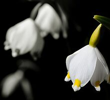 Snowdrops or bells flower by Francesco Malpensi