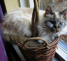 Cute Cat Nina by ienemien