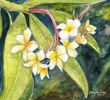 Plumeria by Janis Lee Colon