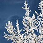 Saskatchewan Hoar Frost by TingyWende