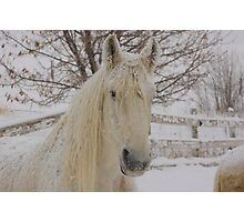 Snow Flakes on Knight Photographic Print