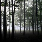 Forest Through the Trees by Doug Hockman