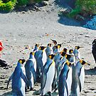 John, Karen and Friends, Macquarie Island by John Donkin