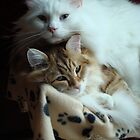 Feline complicity by Marie-Eve Boisclair