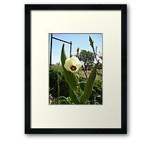 Green Okra in Bloom Framed Print