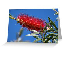 Pretty in Red! Greeting Card