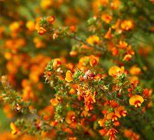 Orange Flowers #2 - Nov 2010 by tmac