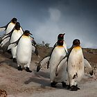 March of the Penguins by Paul Davis