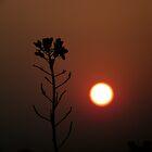 Dusk 04 by Mahesh Kumar
