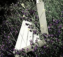 Bench'n Flowers #3 - Nov 2010 by tmac
