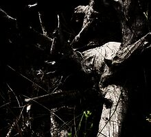 Spooky Old Wood #1a by tmac