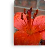 Lily Stamen - After the Rain Canvas Print