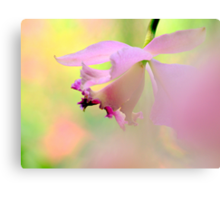 Dwelling in pink mood Canvas Print