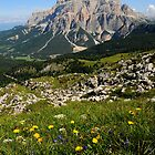 Panorama from Dolomites near Falzarego Pass Cortina - Italy by Francesco Malpensi