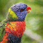 Rainbow Lorikeet in the Rainforest  by aussiebushstick