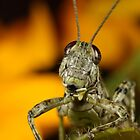 Grass Hopper by Rob Lavoie