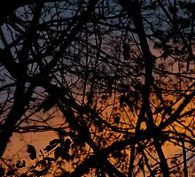 Tree Silhouettes in November Sky, Peach, Orange & Midnight Blue by Claudia Smaletz