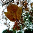 leaf on a windshield by andygirl