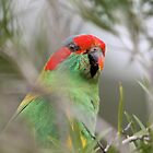In the middle of it all ... Musk Lorikeet by mosaicavenues