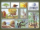 South African Tree Collection by Maree  Clarkson