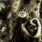 Gnarly by Cathy  Walker