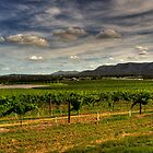 Hunter Valley | Wine Country #2 by Bill Fonseca