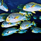 Sweetlips by Melissa Fiene