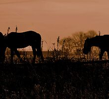 Equine Dawn by Stan Owen