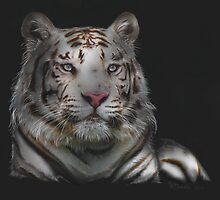 Sublime - Bengal Tiger by Concetta Kilmer