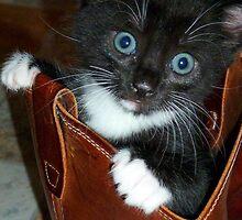 Puss in Boots by Julie Sleeman