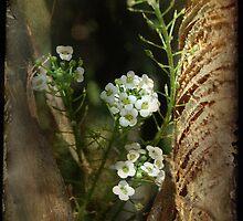Hidden Beauty by Rozalia Toth