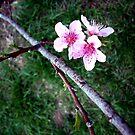 Just Peachy by Jayca