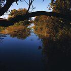 wetlands at dawn by Ilapin