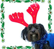 Toby Xmas by beanphoto