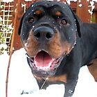 Snowdog. Build Snowdog!!! by Ladymoose