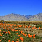 the Pumpkin Patch by sgarrityphotogr
