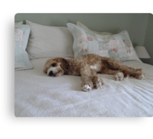Guess Who I Caught Resting On Our Bed!! Canvas Print