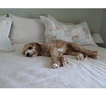 Guess Who I Caught Resting On Our Bed!! Photographic Print