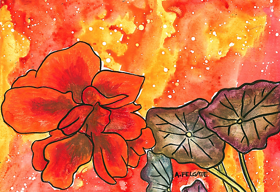 Red Nasturtium by Alexandra Felgate