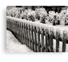 WHITE AS SNOW Canvas Print