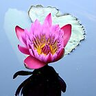 Water Lilly  by Brion Marcum