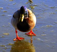 This is not funny!  Where in the heck did the water go??!! by Rose Gallik